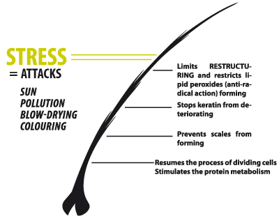 Stress attacks against your hair